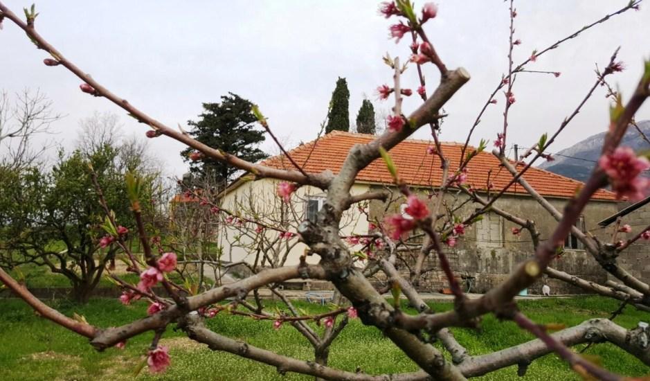 Дом с большим садовым участком